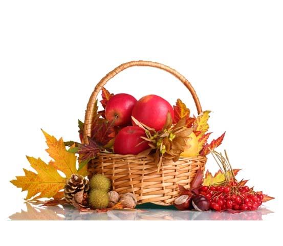 Alimentação no Outono